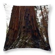Giant Sequoia Trees Throw Pillow