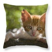 Kitten On A Wall Throw Pillow