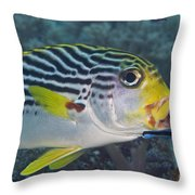 Malaysia Marine Life Throw Pillow