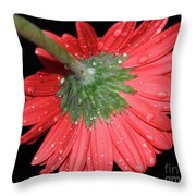 Red Gerber Throw Pillow