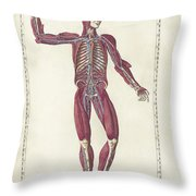 The Science Of Human Anatomy Throw Pillow