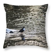 White-throated Dipper Throw Pillow