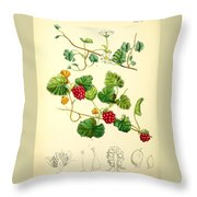 Illustrations Of The Flowering Plants And Ferns Of The Falkland Islands Throw Pillow