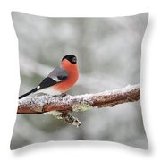 Eurasian Bullfinch In Winter Throw Pillow