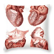 Heart, Anatomical Illustration, 1814 Throw Pillow