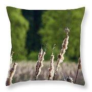 Sedge Warbler Throw Pillow