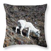 Dahl Sheep, Turnigan Arm Throw Pillow
