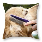 Dog Grooming Throw Pillow by Photo Researchers Inc