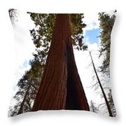 Giant Sequoia Trees Throw Pillow