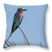 Lilac Breasted Roller On Alert Throw Pillow