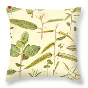 Vintage Botanical Illustration Throw Pillow