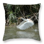 Cattle Egret Cooling Off In The Lake Throw Pillow