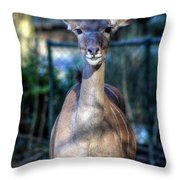 Hellabrunn Zoo - Munich, Germany Throw Pillow