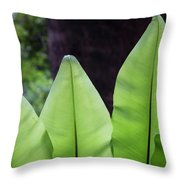 Rainforest At Foxground, Kiama Throw Pillow