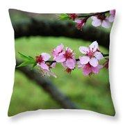 Blossoming Peach Flowers  Closeup Throw Pillow