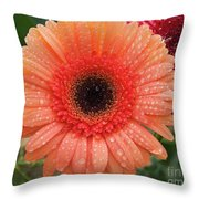 Two Gerbers Throw Pillow