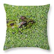 150403p322 Throw Pillow