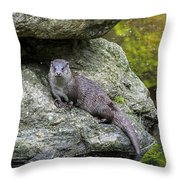 150501p132 Throw Pillow