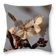 Black Cherry Tree  Throw Pillow