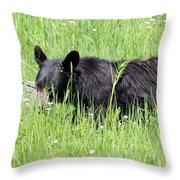 American Black Bear Yellowstone Usa Throw Pillow