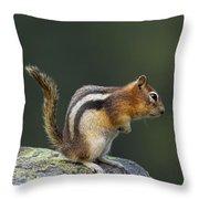 Golden-mantled Ground Squirrel Throw Pillow