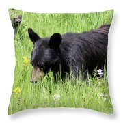 American Black Bear Yellowstone Usa Throw Pillow