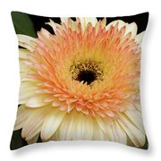 Beautiful Gerber Throw Pillow