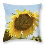 Nice Sunflower Throw Pillow