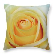 18 Yellow Roses Throw Pillow