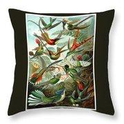 1899 Hummingbird Species Art Forms Of Nature Print Throw Pillow