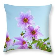Fully Bloomed Pink Dahlia Imperialis At Garden In November Throw Pillow