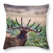 Majestic Powerful Red Deer Stag Cervus Elaphus In Forest Landsca Throw Pillow