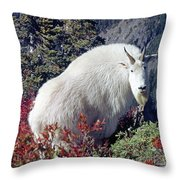 1m4900 Mountain Goat Near Mt. St. Helens Throw Pillow