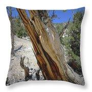 1n6956 Methuselah Tree Throw Pillow