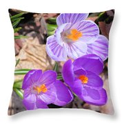 1st Flower In Garden 2010 Photo Throw Pillow