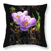 Crocus 0083 Throw Pillow