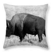 American Bison Buffalo Bull Feeding On Dry Fall Grass Throw Pillow