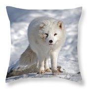 Arctic Fox... Throw Pillow