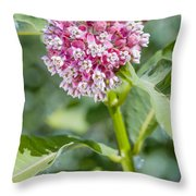 Asclepias Flower Throw Pillow