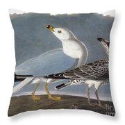 Audubon: Gull Throw Pillow