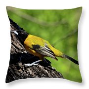 Audubon Oriole Throw Pillow
