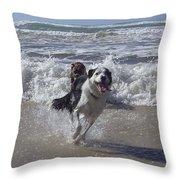 Australia - Border Collie Runs Out Of The Surf Throw Pillow