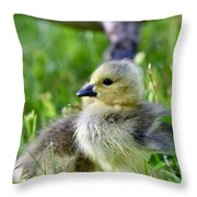 Baby Goose Chick Throw Pillow