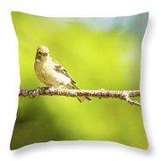 Baby Sparrow Throw Pillow