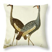Balearica Regulorum Grey Crowned Crane, Robert Jacob Gordon, 1777 - 1786 Throw Pillow