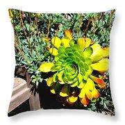 Succulent Study 2 Throw Pillow