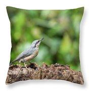 Beautiful Nuthatch Bird Sitta Sittidae On Tree Stump In Forest L Throw Pillow