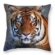 Bengal Tiger Laying In Water Throw Pillow