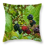 Berries In Vicente Perez Rosales National Park Near Puerto Montt-chile  Throw Pillow