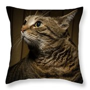 Big Cat On Chair Throw Pillow